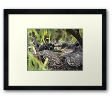 Jealousy About Food - Rivalidad Framed Print