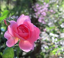 Pink Rose with Meadow Rue by Pat Yager
