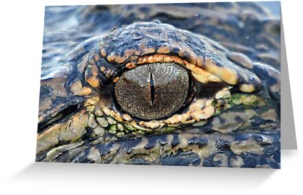 The eye of the gator ! by jozi1