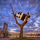 Cow up a Tree by Chris Mitchell