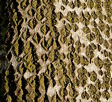 Tree Bark Camouflage (Poplar Tree) by M. van Oostrum