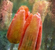 Peach by Liz Ruest