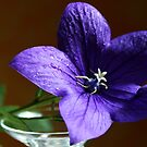 Purple Bell Flower by karina5