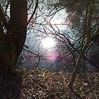 Light peeks through trees and says 'Hello'. by Kellyanne