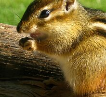 Chipmunk Case by Heidi Hermes
