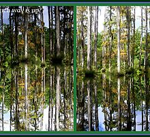 Mirror Images, Cypress Trees by Paula Tohline  Calhoun