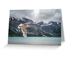Glacier Bay Fly By Greeting Card