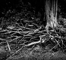 Wired Roots by samspix