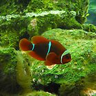 clown fish by perggals
