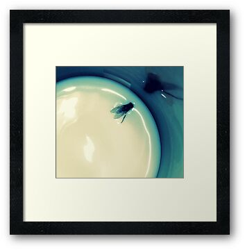 Fly in the Milk by Margaret Bryant