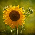 Sunflower by Lightengr