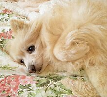 Charley in the Morning  by Barb Leopold