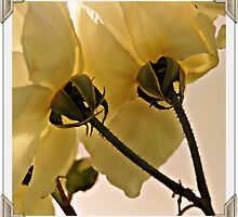 ~Calyces and Sepals~ by a~m .