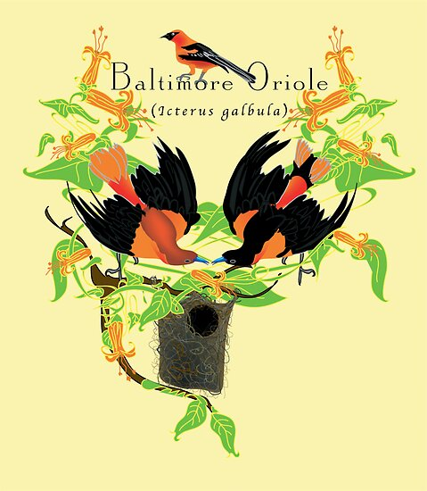 Baltimore Oriole (2005) by Robyn Scafone
