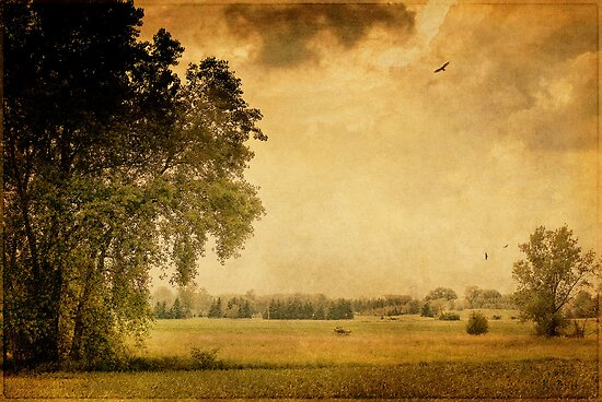 Prairie Field by KBritt