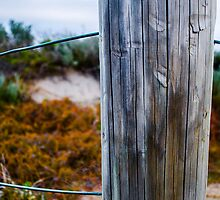 Sand Dune Post by Jonathan Trimble
