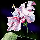 Pale Pink Hibiscus against a dark background by Esmee van Breugel
