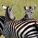 Zebra friends by Keith Davey