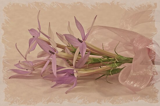 Mauve Ribboned Stars by Sandra Foster