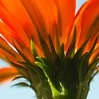 Orange Flower - Up Close and Personal by ionclad
