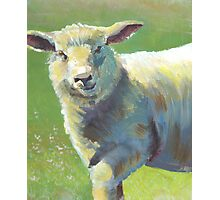 Animal Portrait Painting of a Sheep Photographic Print