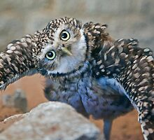 Owl with Attitude (Burrowing Owl) by Krys Bailey