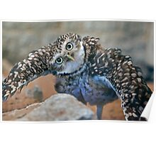 Owl with Attitude (Burrowing Owl) Poster