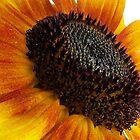 sun flower macro by Enri-Art