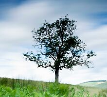 Taken with Lee Big Stopper, Tree next to the Southern Upland Way, Scottish Borders by Iain MacLean