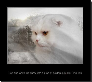 """Soft and white with a drop of golden sun"" by Mui-Ling Teh"
