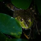 Curious Frog by vasu