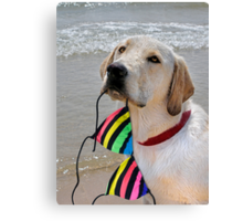 Good Retriever Canvas Print