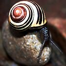 Snail On a Rock by theartguy