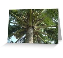 coconut tree Greeting Card