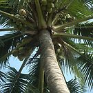coconut tree by bayu harsa