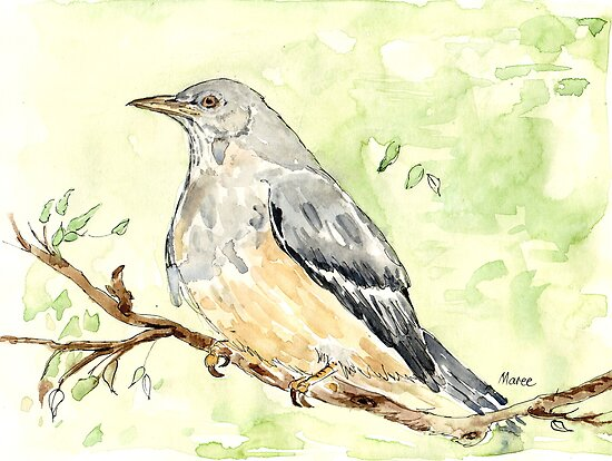 Olive Thrush (Turdus olivaceus) by Maree Clarkson