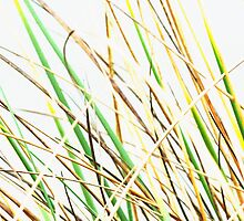 The Marram Grass  by PictureNZ
