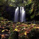 How Great it Is ~ McDowell Creek Falls ~ by Charles & Patricia   Harkins ~ Picture Oregon