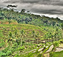 Rice Paddies of the Gods by Brandon Nadeau