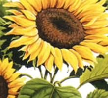 Let the Sunshine In (T-Shirt & Sticker) Sticker