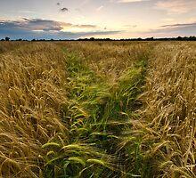 Barley, Suffolk by Thomas Harvey