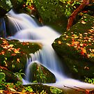 MOUNTAIN STREAM, AUTUMN by Chuck Wickham