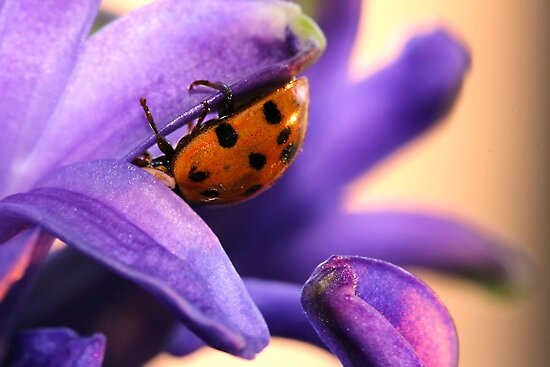 Ladybug On Purple by Christy Patino