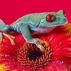 Red Eyed Tree Frog by Val Saxby