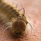 Macro Caterpillar by Christy Patino