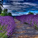 Woodland Lavender Farm by TRDesigns