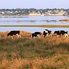 The Beauteous Cows of Overton by Debbie  Roberts