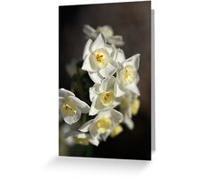 Jonquils Greeting Card