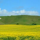White Horse by trobe