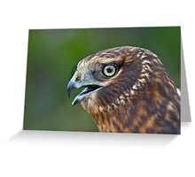 Northern Harrier Portrait Greeting Card